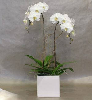 Square jar with tall white flowers